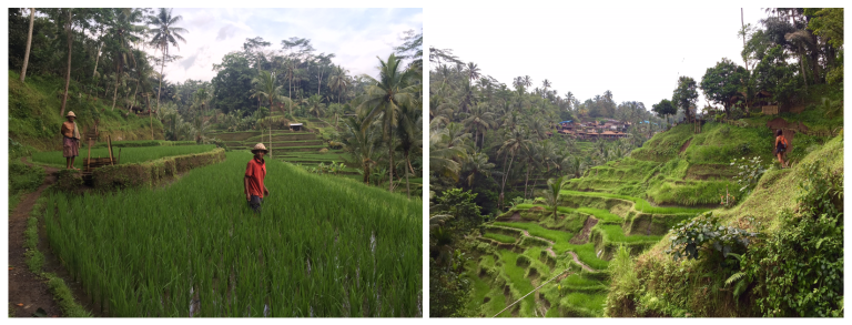 rice-paddies-ubud-christie-lee-2016